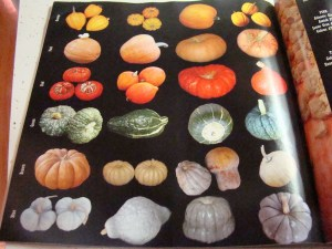 some of Baker Creek's HUGE curcurbit selection