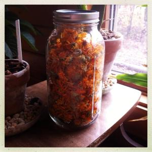 dried calendula flowers.  not a bad haul for such a small patch!