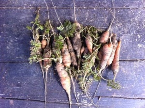 today's pickins