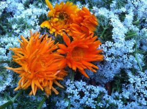 the first calendula flowers on a bed of valerian flowers.  that orange is so intense.