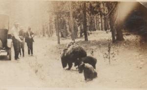 1924glenseymouryellowstone1