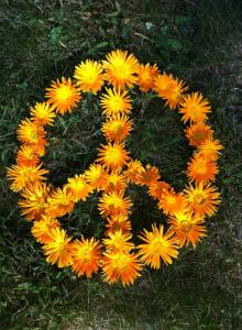 calendula: the peacemaker for angry skin!