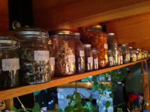 this is my herb shelf, arranged in alphabetical order (of course).  i wanted to arrange it in order by latin name, but Jeremy vetoed that.  i may yet do it.  that big gallon jar full of orangey-goodness is calendula.