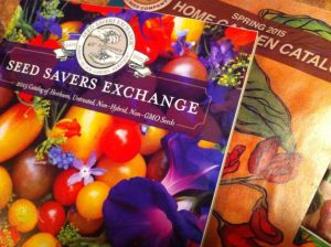 This year's Seed Savers catalog with Grampa Ott's morning glories on the cover!