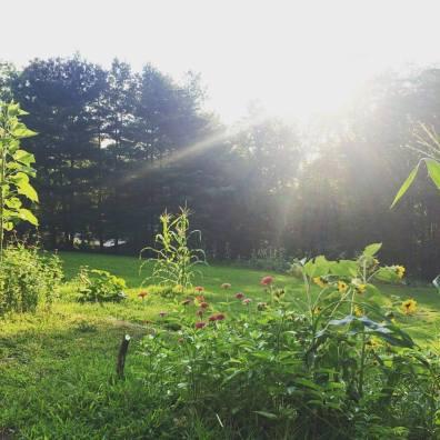 wellspring garden sunrise